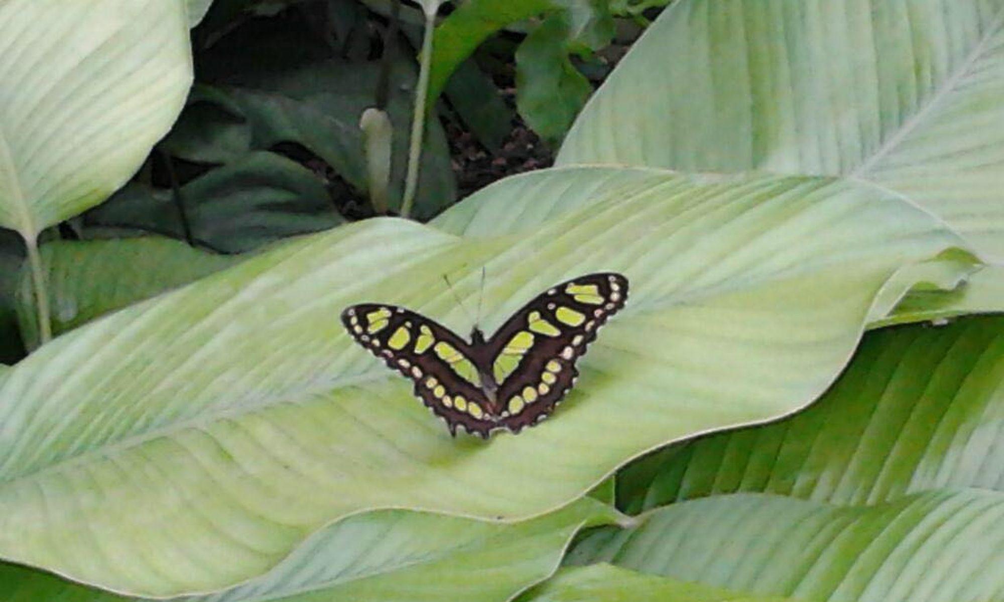 VlinderVeerkracht